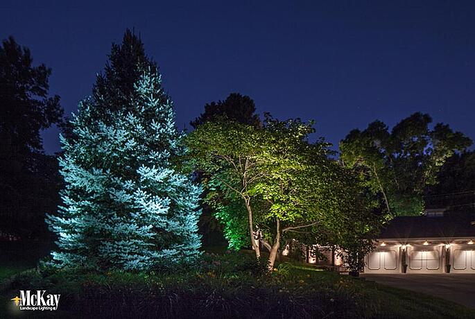 A cool white LED landscape lighting bulb creates a subtle and natural way to enhance a blue spruce's color at night
