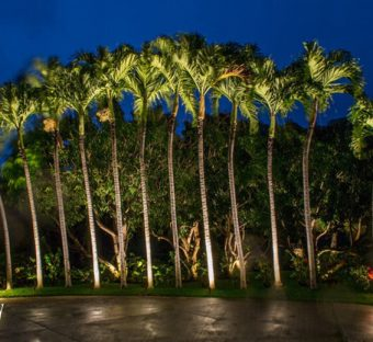 Professional Landscape Lighting