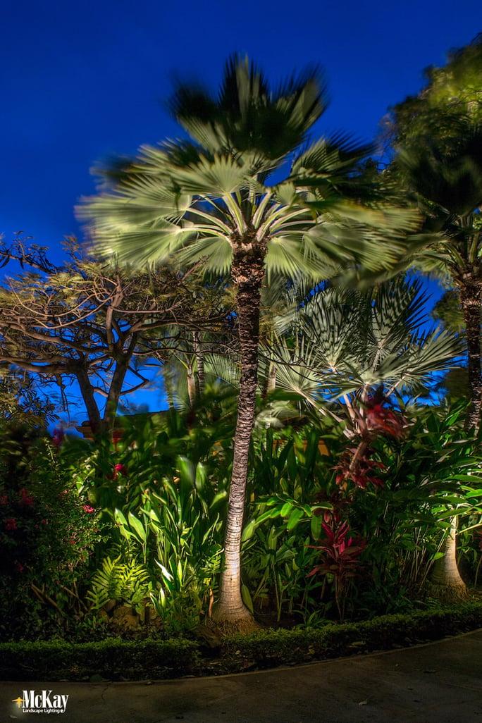 Palm Tree Lighting - Maui Outdoor Lighting Design - McKay Landscape Lighting