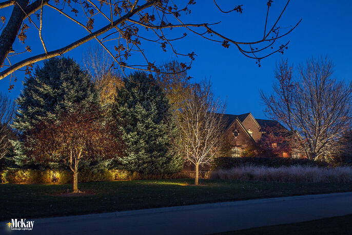 Landscape lighting coniferous trees omaha nebraska