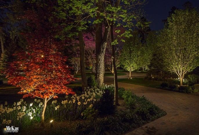 Tree Landscape Lighting Omaha Nebraska